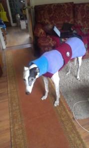 Cosy in my house coat