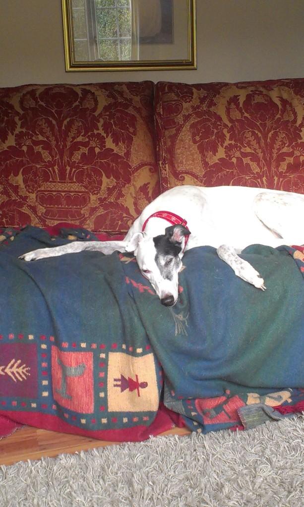 Tired at Christmas